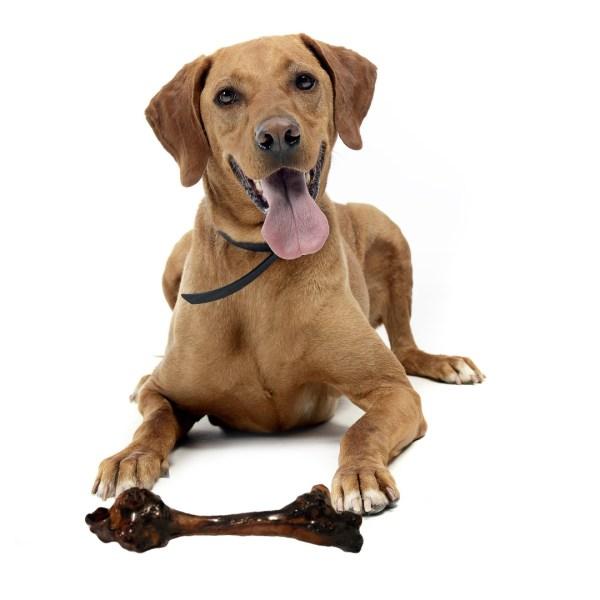 Kangaroo bone with Dog