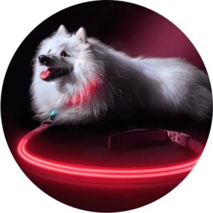 dogcollar1