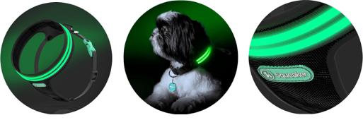 dogcollar4