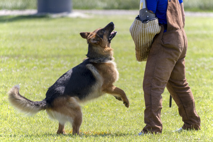 Easy ways to train a German shepherd