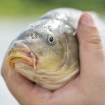 Essential Items for Carp Fishing