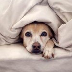 Tips to Keep Your Pets Happy in Cold Weather