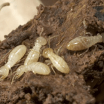 Termite Inspection Time: How to Know When You've Got An Infestation