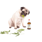 CBD Oil For Dogs - A Quick Look