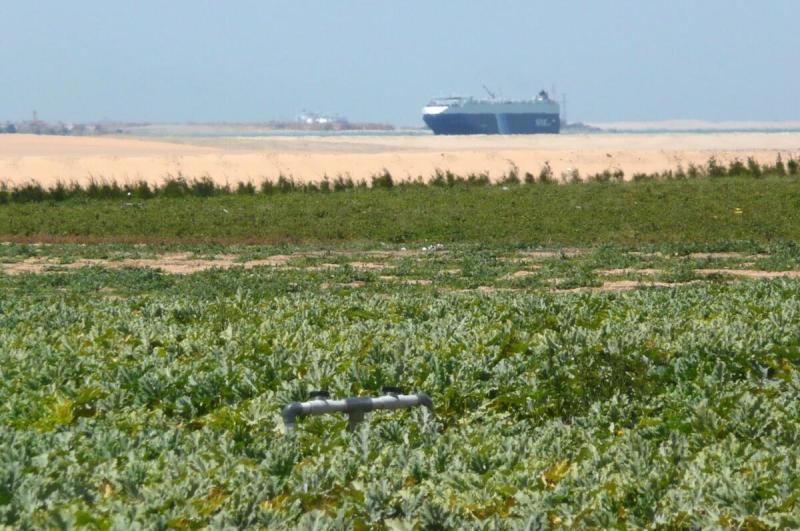 Blick über die Farm auf den Suezkanal, April 2011