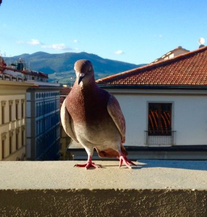 """A Pigeon Trying to """"Sneak"""" onto our Table to Try the Food"""