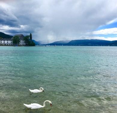 Square: View of the Lake a la Klimt