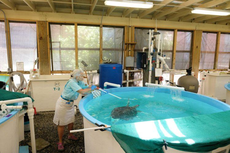 Sea Turtle Center 2