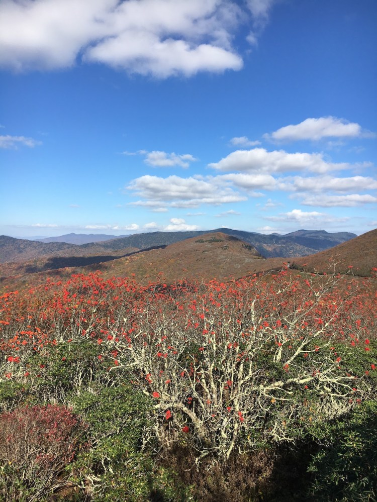 A view of the mountains in mid-October on the Craggy Pinnacle Trail, one of the best hikes near Asheville, NC.