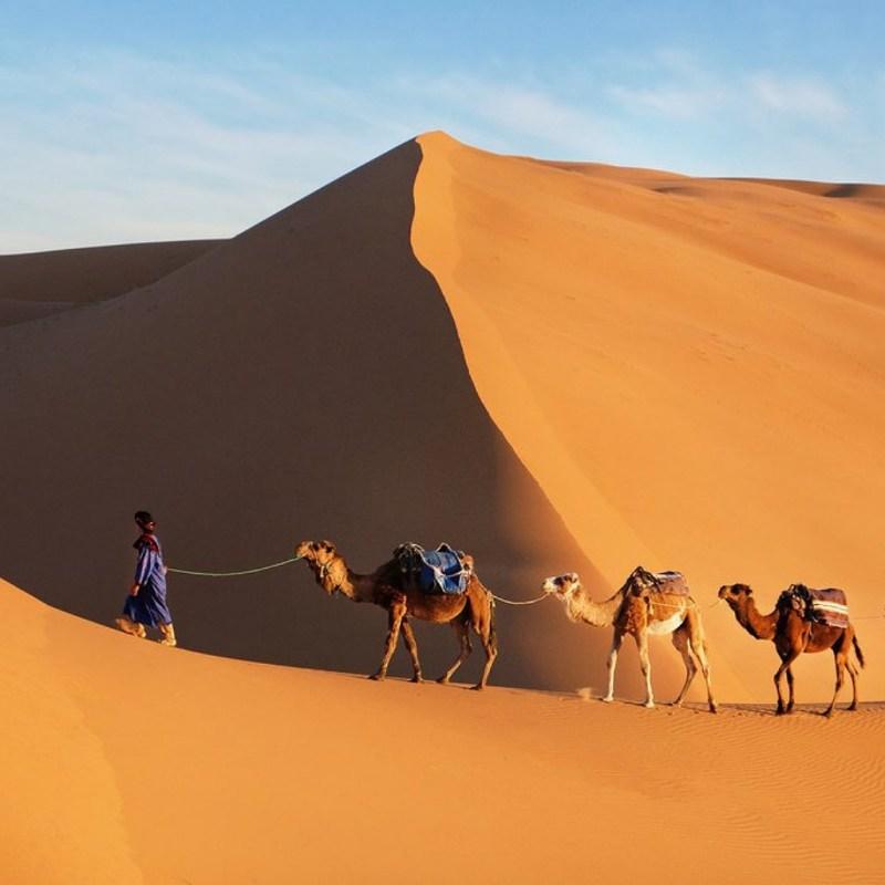 CAMEL SAHARA DESERT MOROCCO TOUR