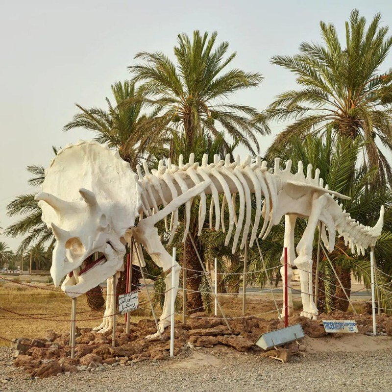 fossils tours in morocco