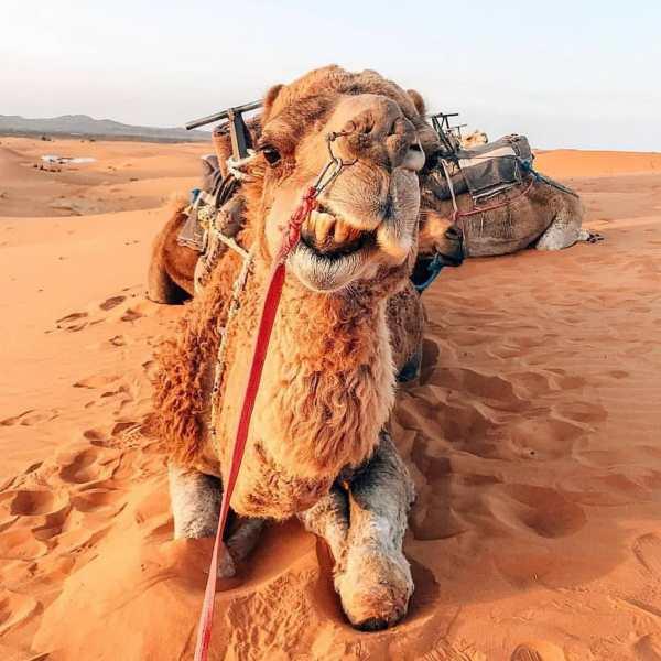 Marrakech 10 Days tour - Sahara Desert & Imperial cities of Morocco88