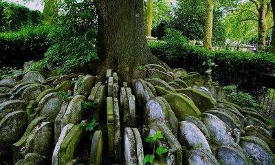 copacul Hardy