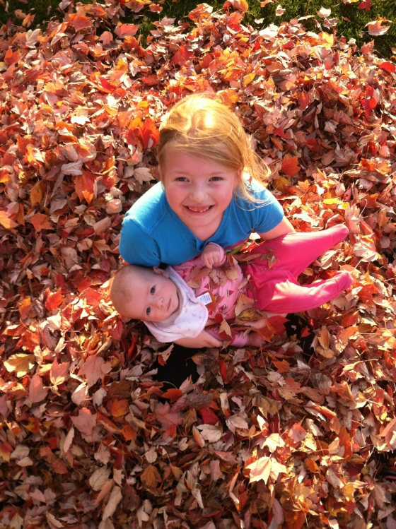 in the leaves from top