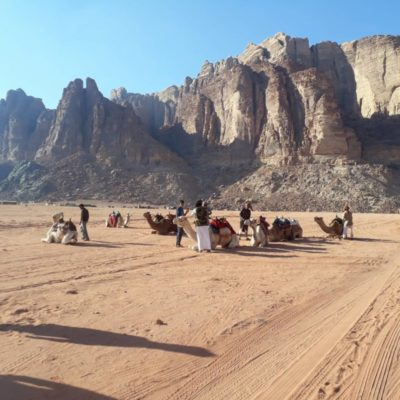 wadi rum camel tours