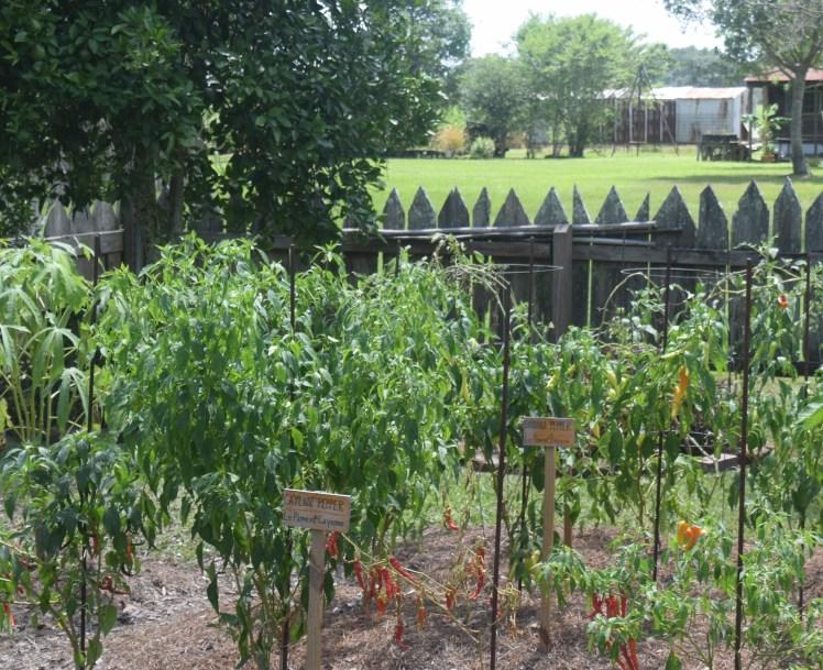 Vacherie garden