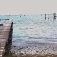 Barnacle dock