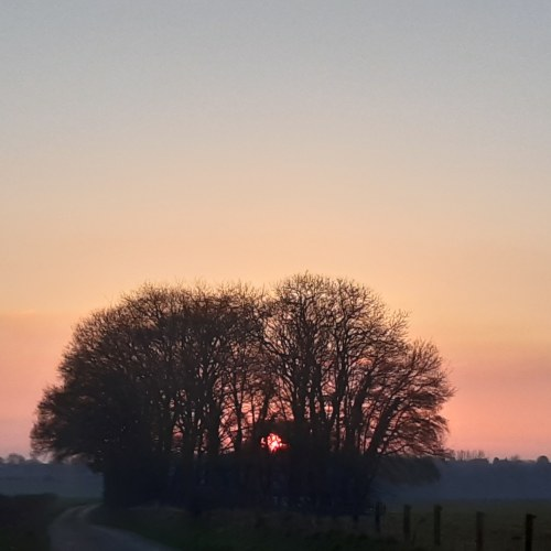 photo of sunset behind leafless trees