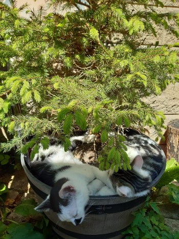 kittens curled up asleep in base of plant pot