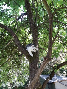 photo of kitten in tree