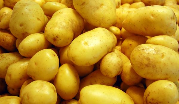 Potato - Home remédios para a perda de cabelo