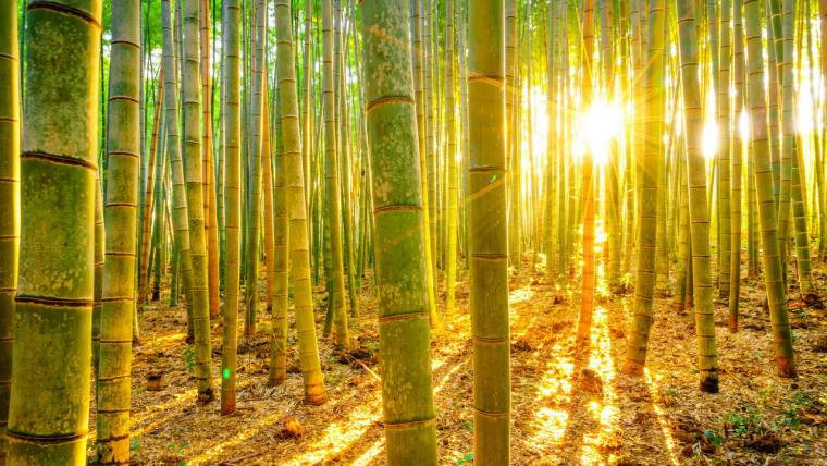 author joanne reed this is your quest what you want to be when you grow up bamboo farmer