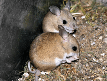 Cute but DESTRUCTIVE little buggers.