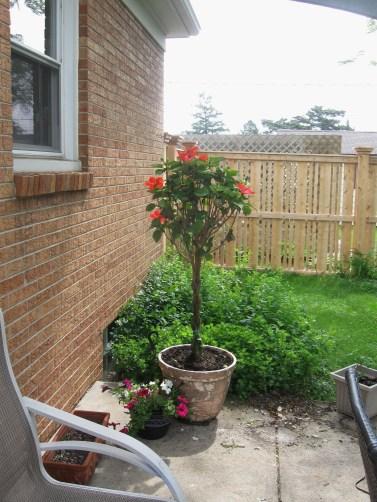 Backyard 2014 003