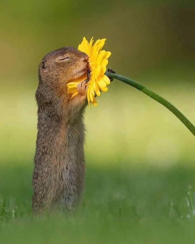 squirrel hugging flower from clima extremo