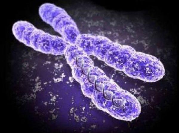 chromosome 5