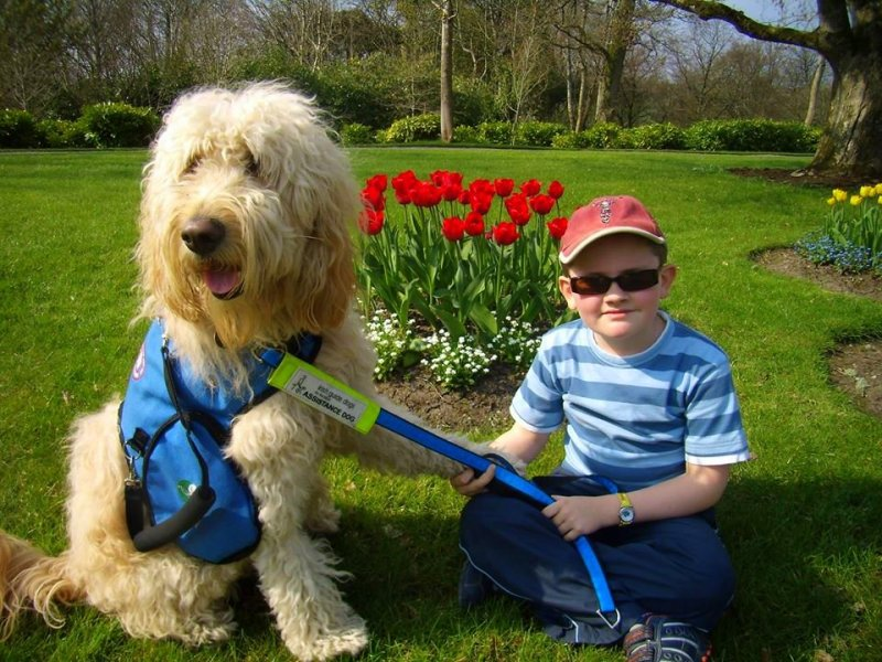 Q&A with Clive -Ireland's Autism Service Dog Extraordinaire tulips