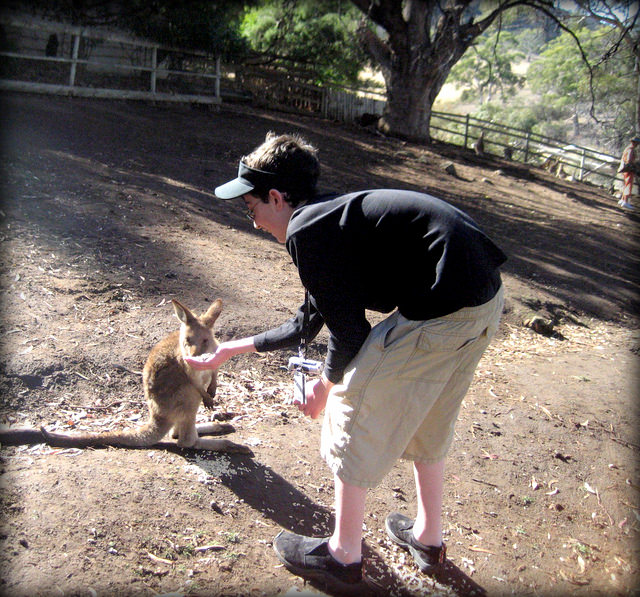 Autisticglobetrotting's Top Ten Unforgettable Animal Encounters kangaroo
