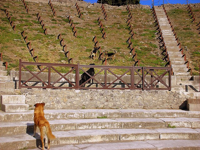 Visiting Pompeii with Autism dog