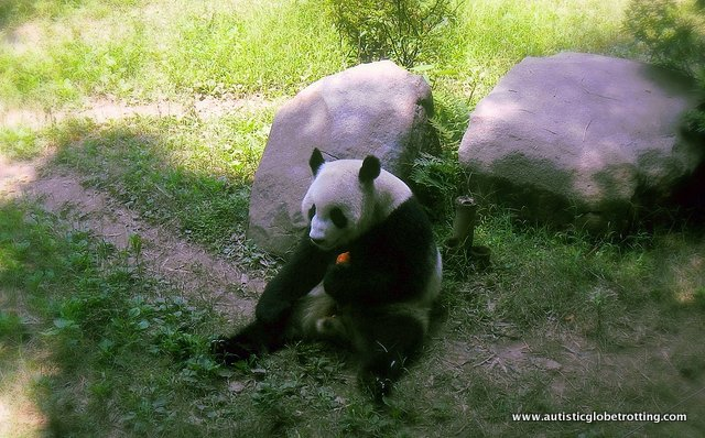 Four Family Friendly Attractions in Guangzhou China panda