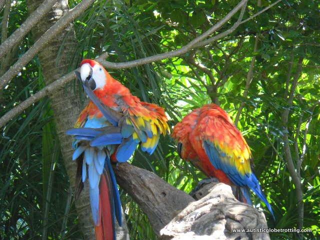 Riviera Maya's Best Aquatic Adventure Parks for Kids With Autism parrots