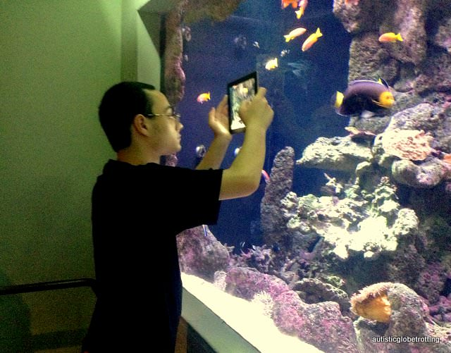 Five Sensory Attractions worth visiting in Dallas fish
