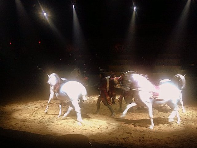 Taking Your Kid with Autism to Medieval Times horse