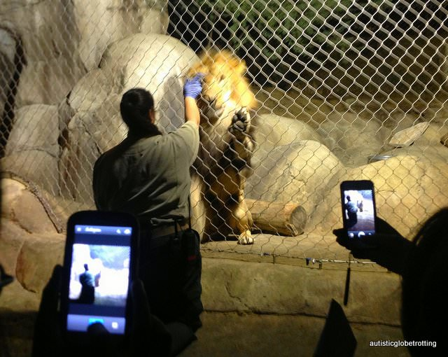 Five Sensory Attractions worth visiting in Dallas lions