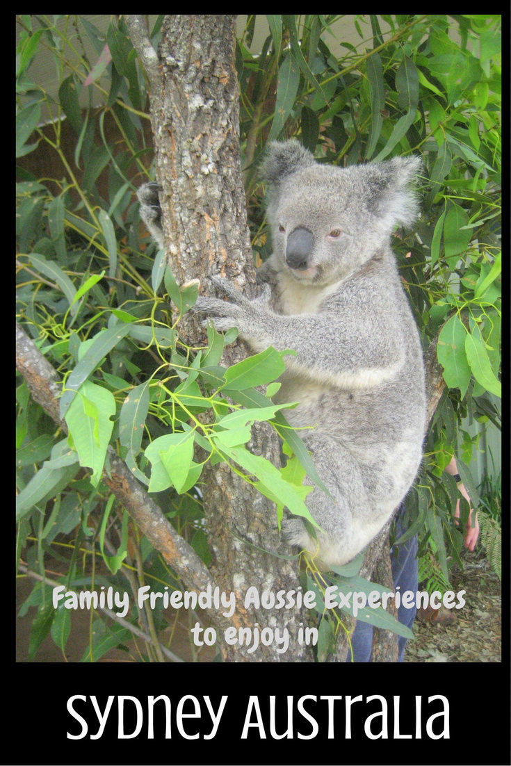 Family Friendly Aussie Experiences to Enjoy in Sydney pin
