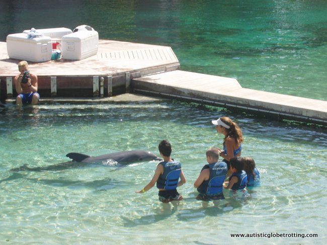 Handling Dolphin Encounters for Kids with Autism 6