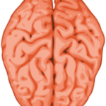 New brain studies offer hope with social language