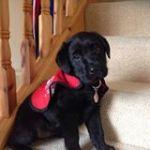 Autism Assistance Dog Found