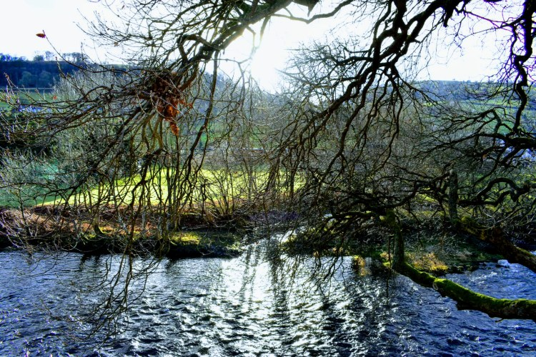 Looking out over a river with tree branches in the foreground. The sun is shining