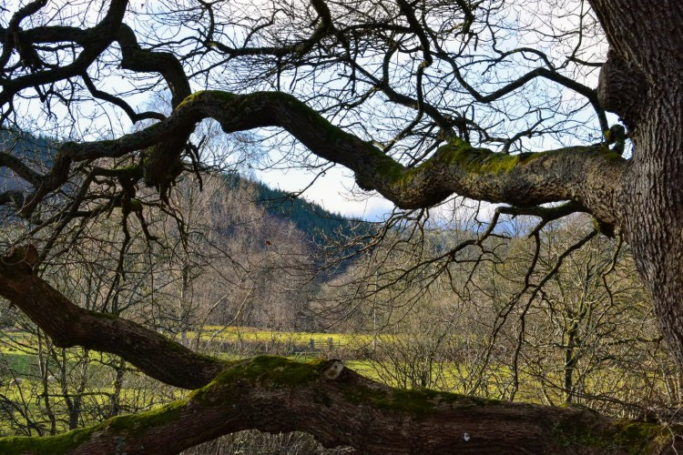 Tree branches with rolling green hills behind
