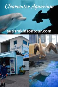 Clearwater Marine Aquarium, Florida