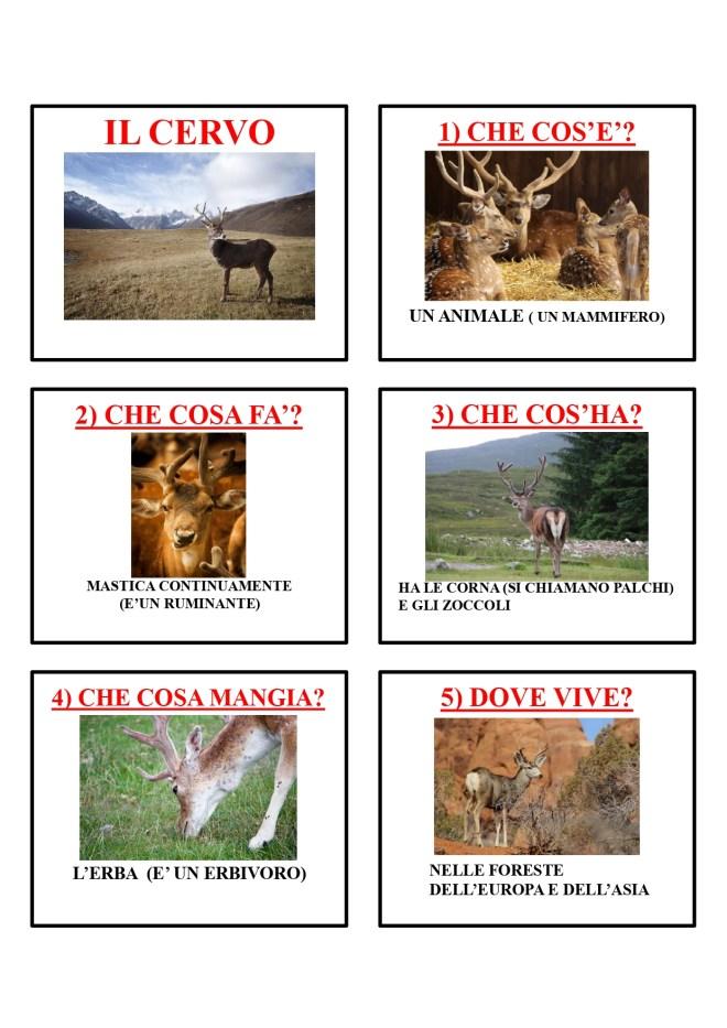 gli animali-i mammiferi_page-0012