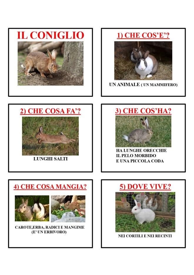 gli animali-i mammiferi_page-0014