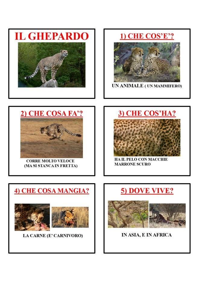 gli animali-i mammiferi_page-0019