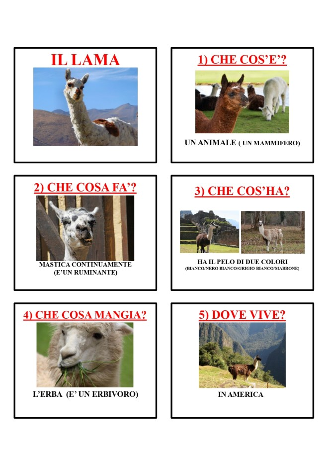 gli animali-i mammiferi_page-0024