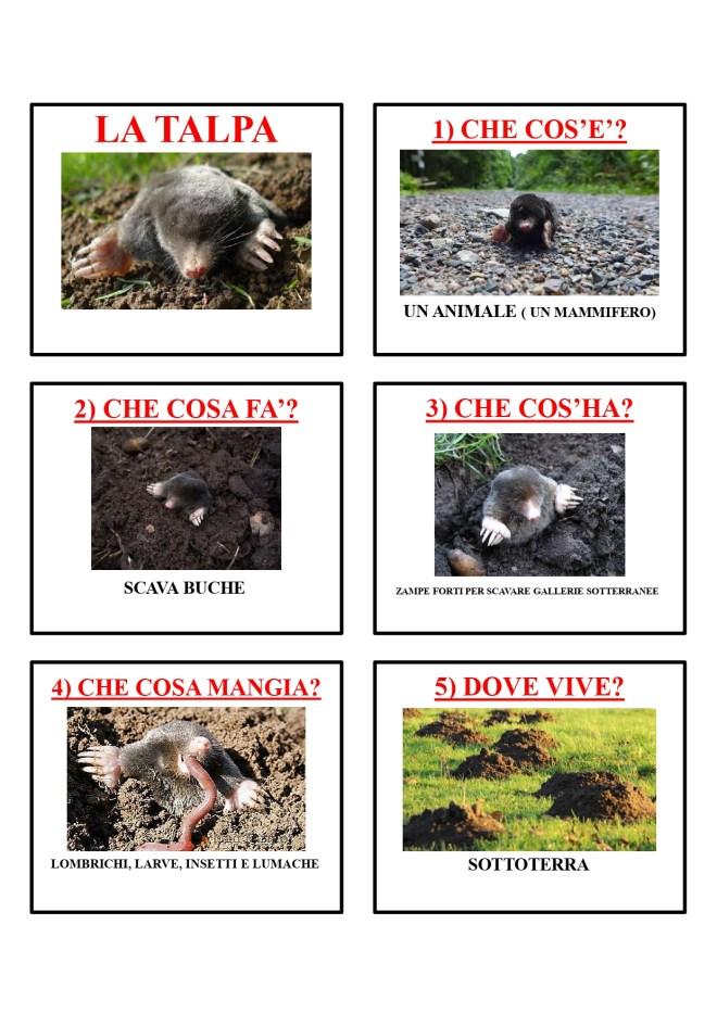 gli animali-i mammiferi_page-0041